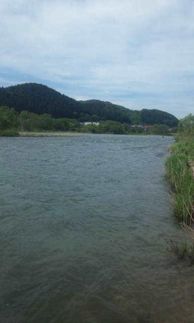 写真7五松橋上流右岸オフサイド.jpg