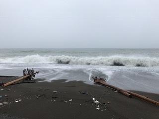 岩代浜  流木が漂着してます.JPG