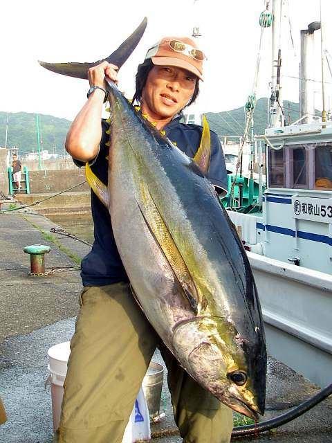 286kihada_fujihashi